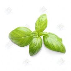 Базилик зеленый свежий